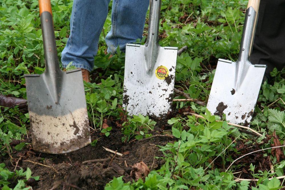 Een milieuvriendelijke tuin aanleggen én onderhouden doe je zo