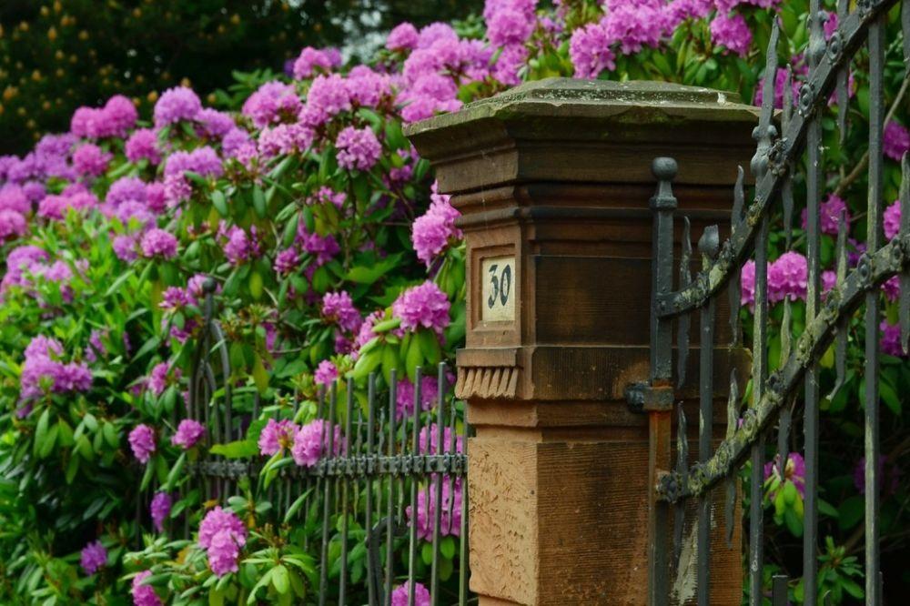 Rhododendrons: een handleiding