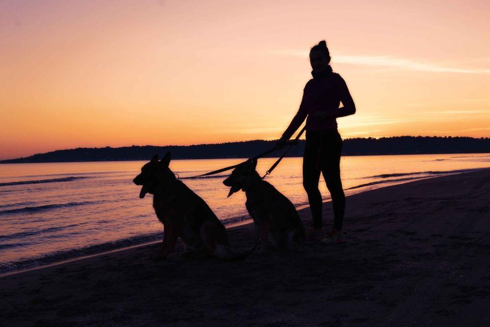 Wat onthult de keuze van huisdier over jouw persoonlijkheid